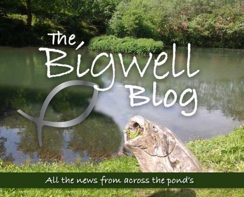 Bigwell-Blog