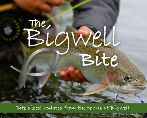 The Bigwell Bite